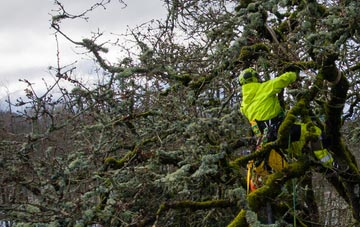 experienced Westminster arborists are needed