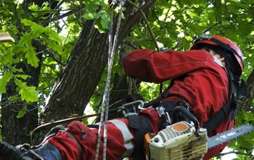 hiring professional Westminster tree surgeons