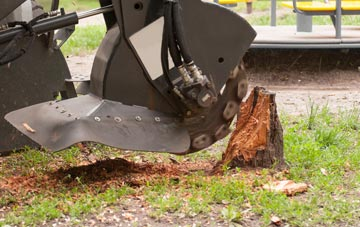 professional Westminster stump grinding services
