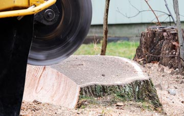 tree stump grinding Westminster