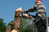 Westminster felling services