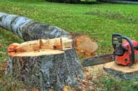free Westminster tree felling quotes