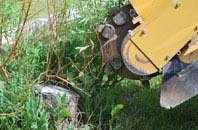 free Westminster tree stump grinding quotes