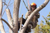 Westminster tree surgeon services